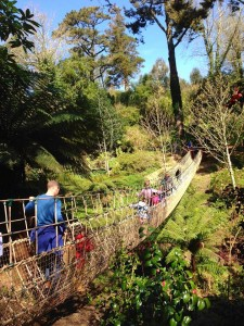 The rope bridge spanning part of the jungle.