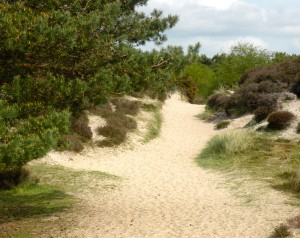 On the Studland sand dune trail