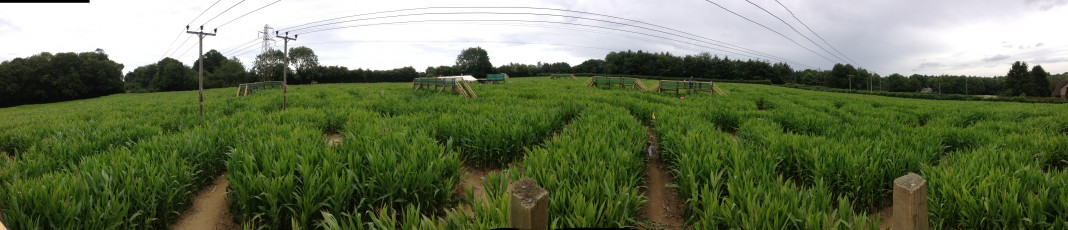 Eight hectares of maze
